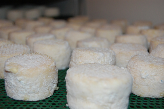 fromagerondeau